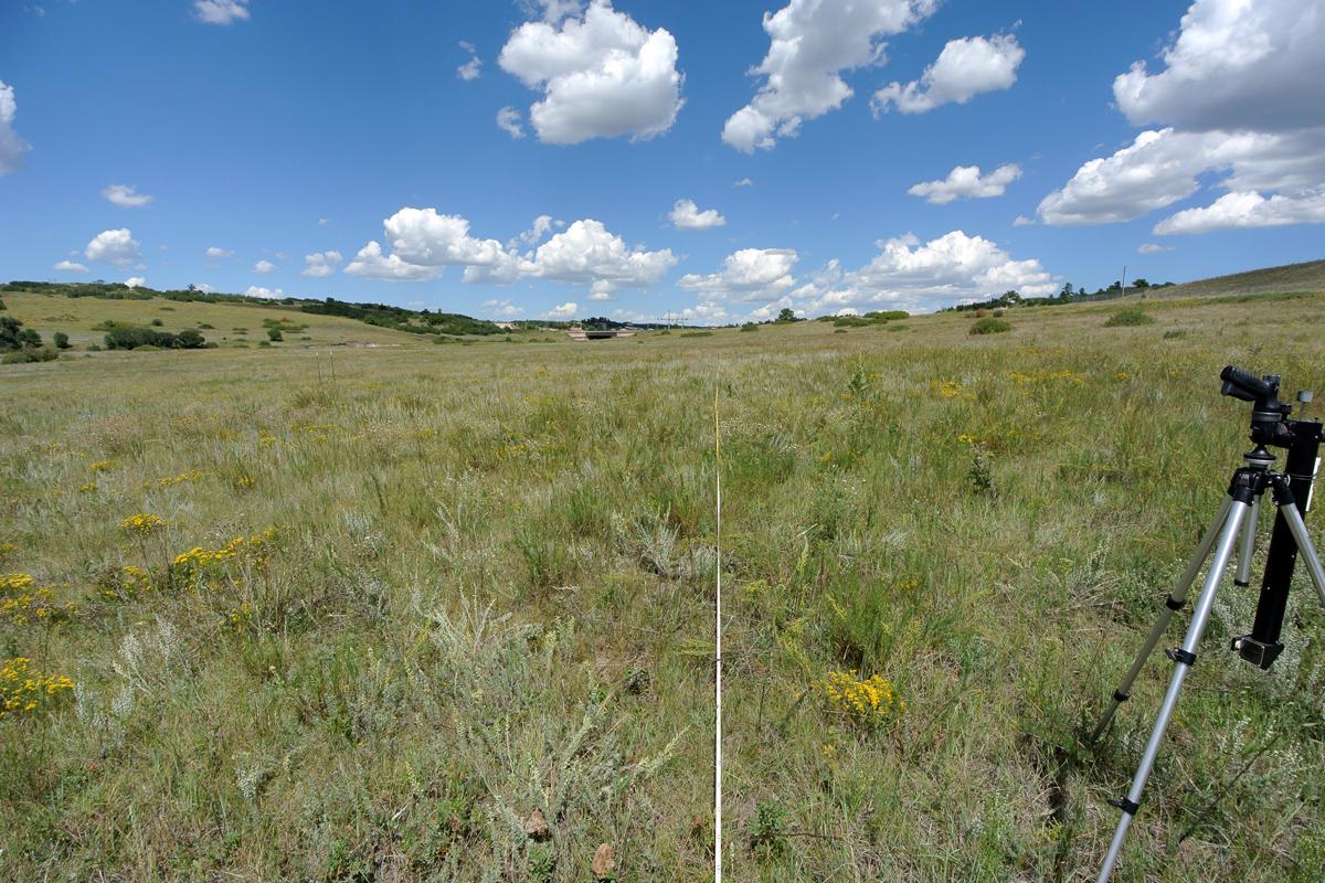 Baseline Vegetation Inventory