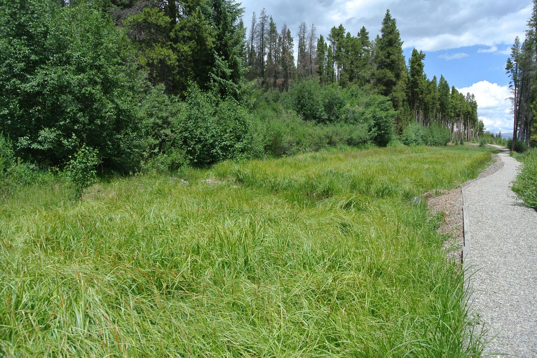 CR3 Wetland Creation