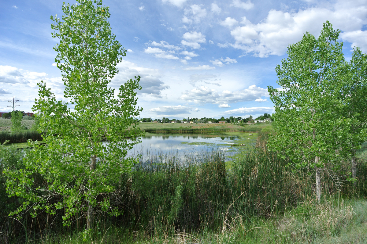 North Pond 2017