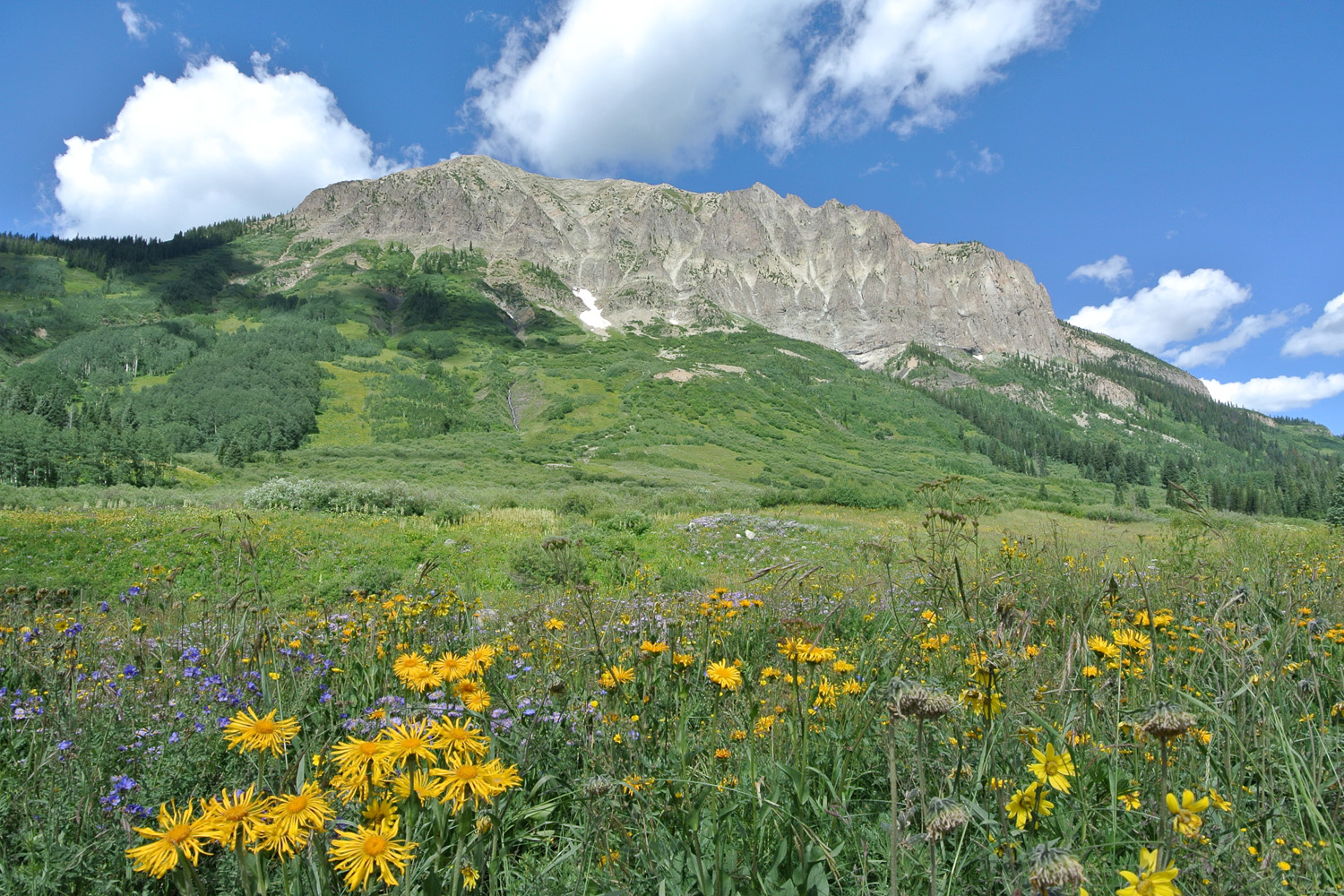 Plant Ecology Crested Butte Meadow 1500 x 1000