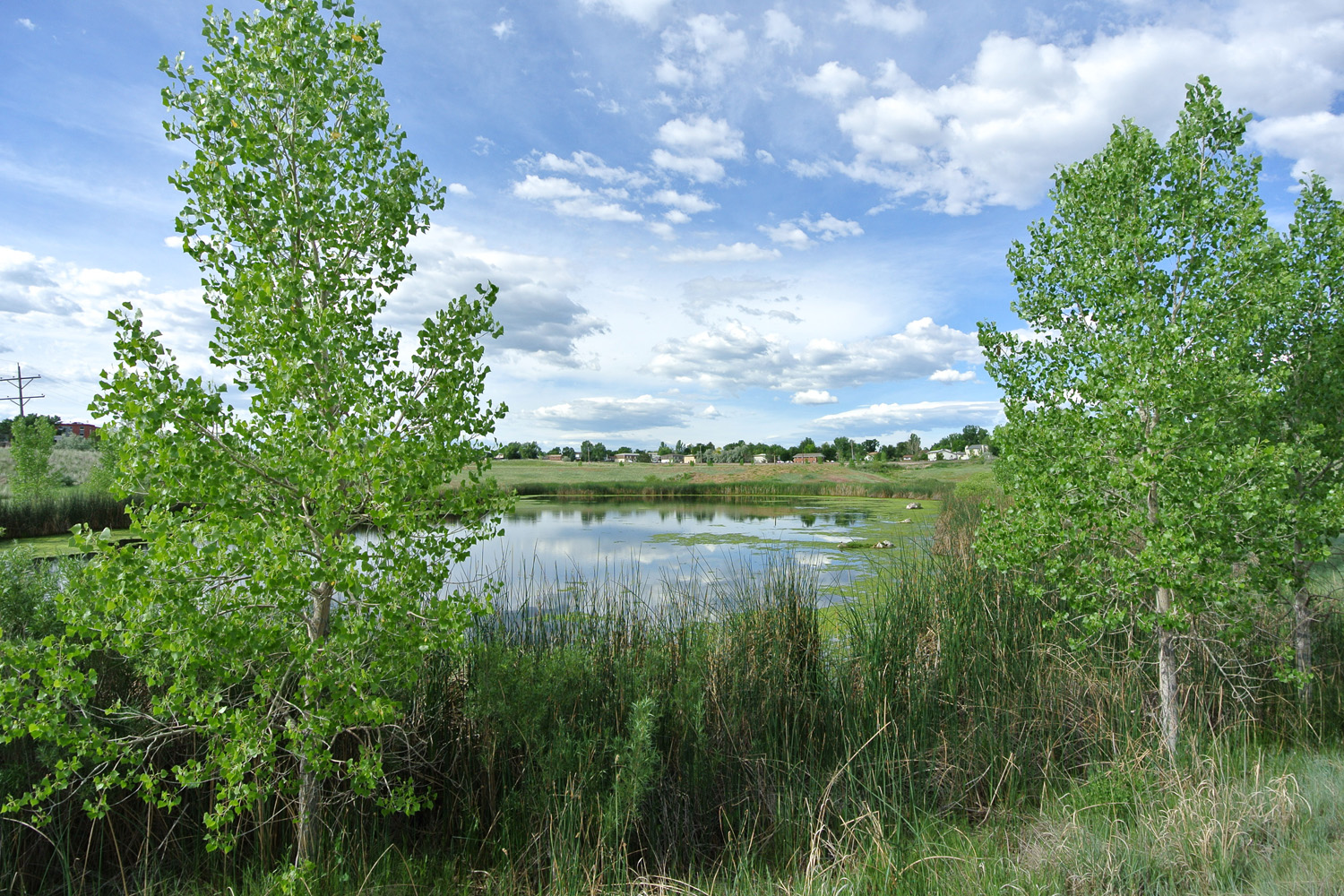Wernimont Ponds Wetland Creation and Ecological Restoration