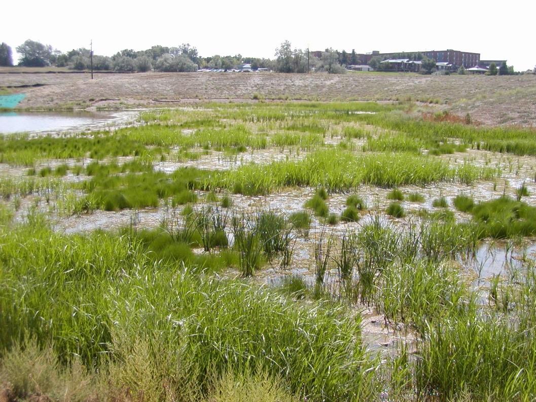 wernimont-ponds-project10