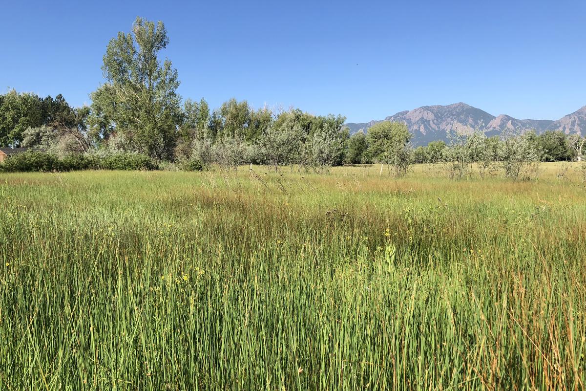 Zen Center Wetland Meadow