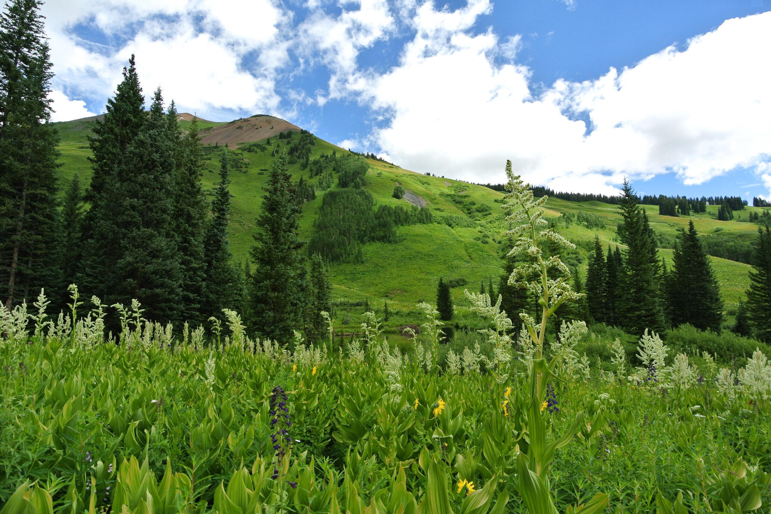 Birch Ecology News